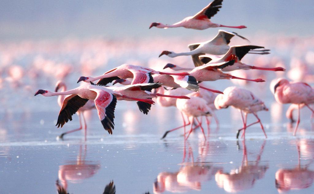 探索纳库鲁国家公园