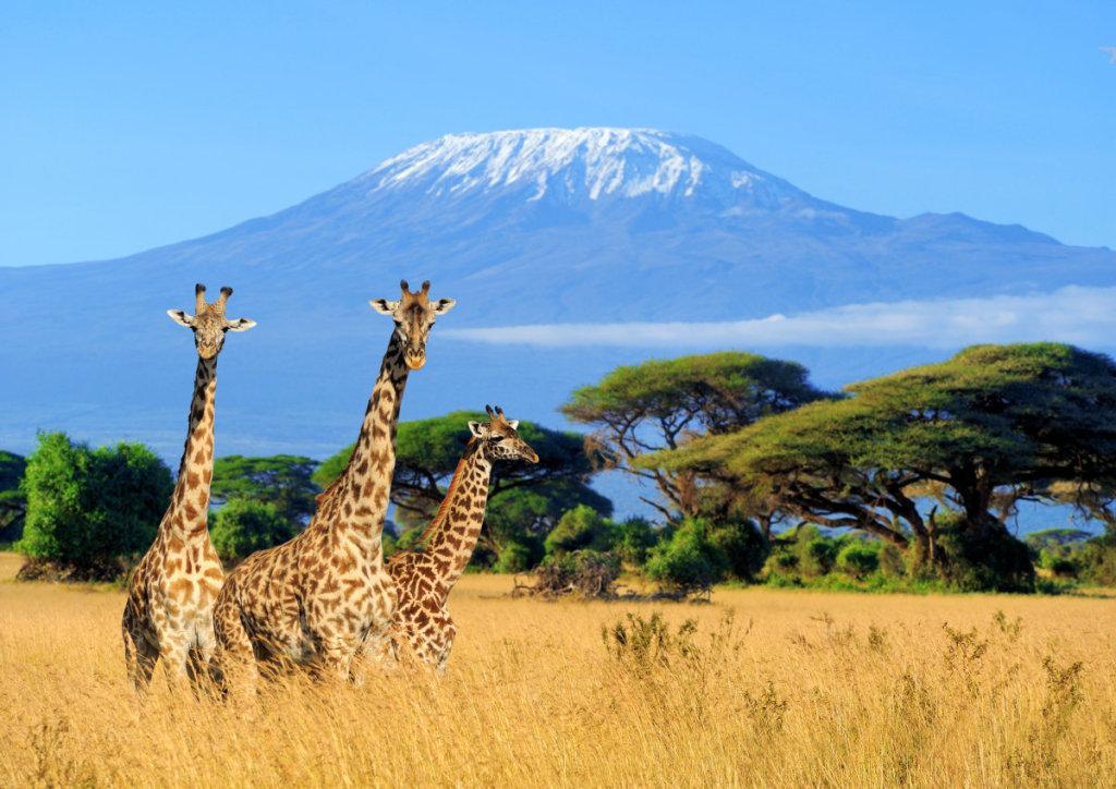 肯尼亚野生草原动物保护项目
