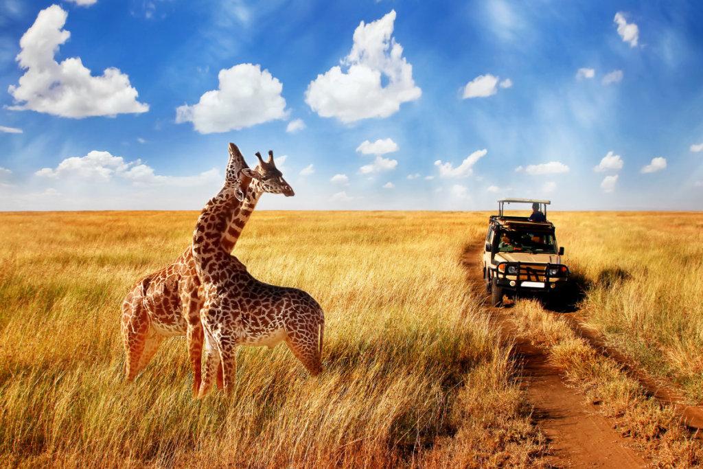 濒危动物罗氏长颈鹿的保护