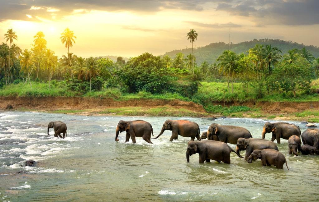 探访世界第一所大象孤儿院