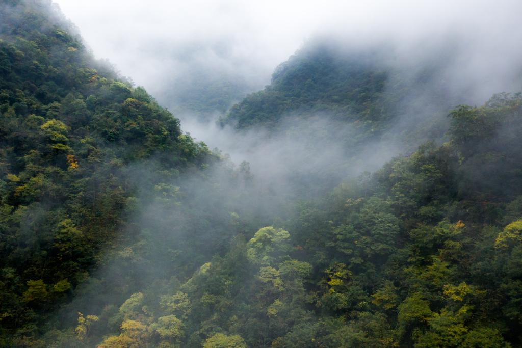 Sichuan Guanba
